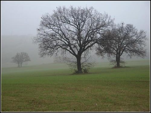 italy verde alberi italia rimini cielo nebbia rosso azzurro bianco romagna dedicata coriano sanpatrignano bellitalia valeriolanci sonydscw170 100commentgroup virgiliocompani
