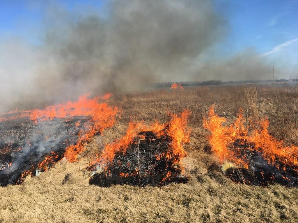 ALUUC prairie burn 2017