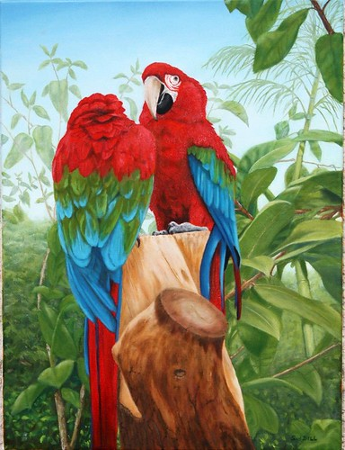 Green Winged Macaws by Sid's art