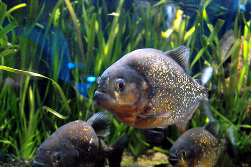 Aquarium club hola valencia blog for Aquarium valencia bar