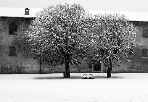 Alberi dalla bianca chioma... by Claudio61 una foto ferma un ricordo nel tempo