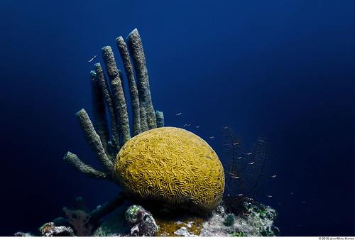 Ocean Brain