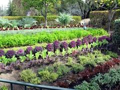 Edible garden at Pixie Hollow