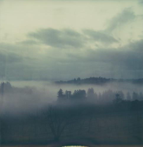 sky cloud mist tree film fog forest landscape polaroid sx70 vineyard fnd sonomacounty sebastopol furlong atz mspick
