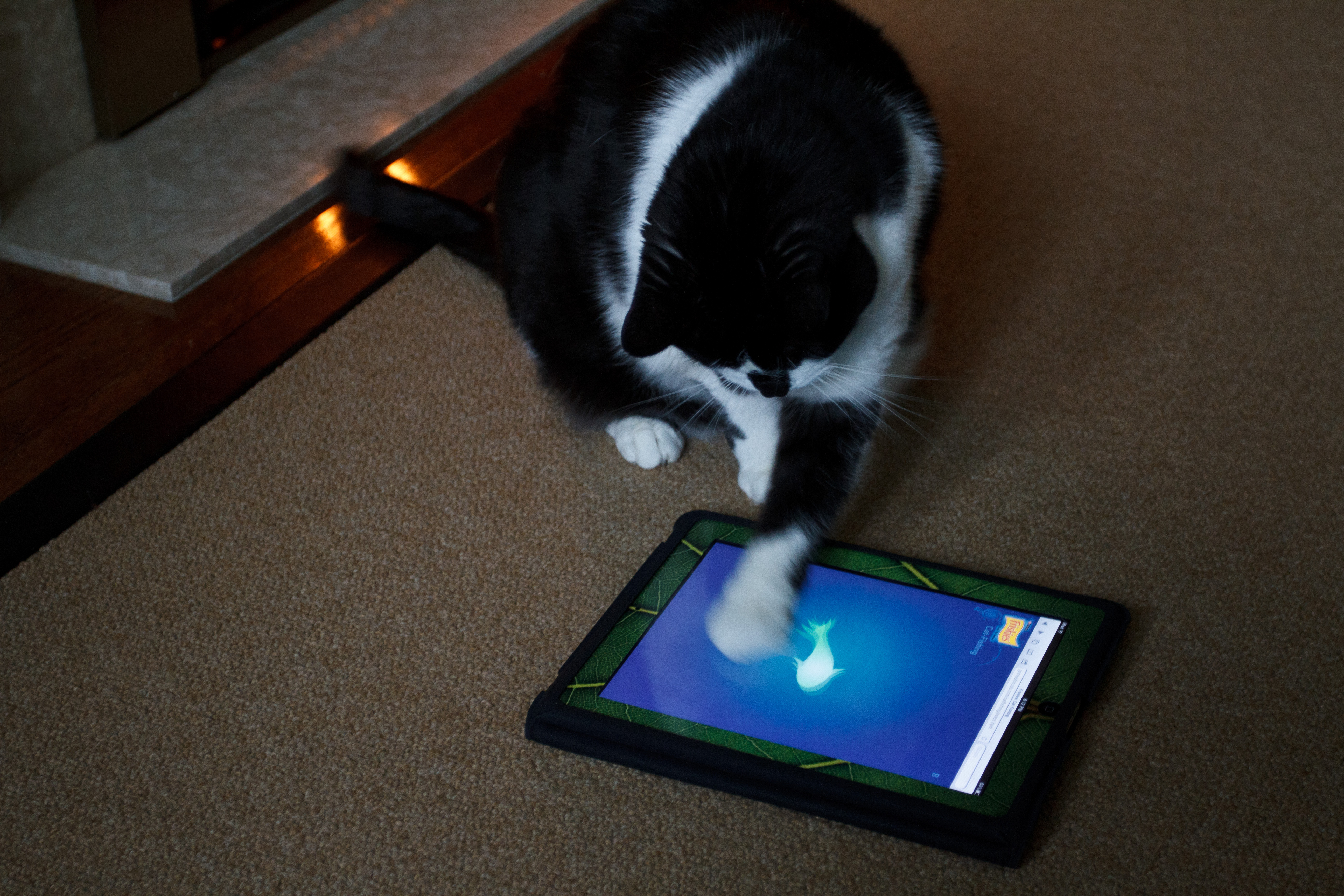 Storm plays cat fishing friskies flickr photo for Friskies cat fishing