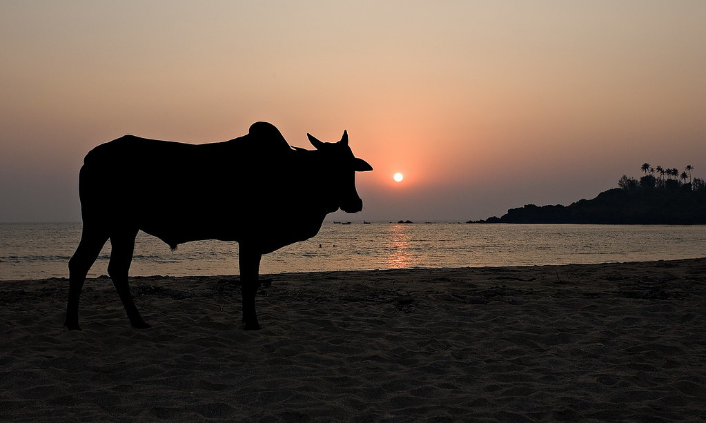 пляж Patnem гоа