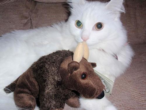 Buddy&Cat