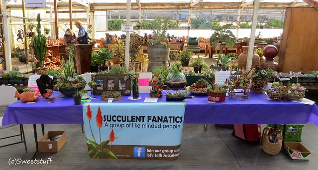 Succulent Fanatics table