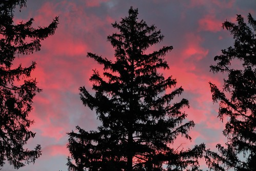 blue trees sunset red sky evening sillouette