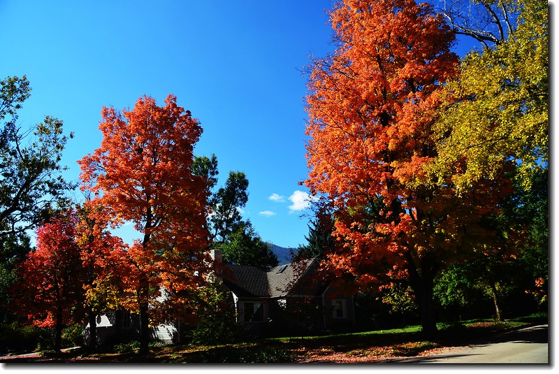 Maple in Fall, Mapleton Hill, Boulder (41)