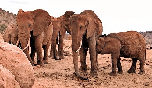 holiday elephant kenya lodge east safari elefant kenia ost tsavo reise tsavoeast voi kenyaholiday tsavoost voisafarilodge kenyaelephant keniaelefant keniareise