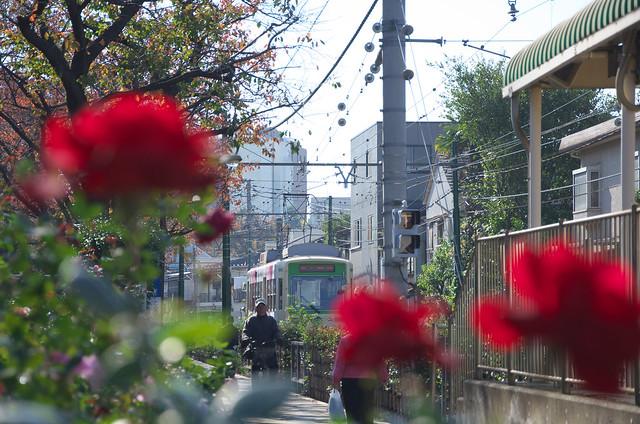 Tokyo Train Stoy 都電荒川線 2013年11月16日