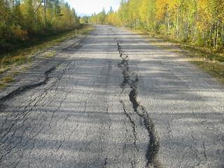 Finland severe frost damage.JPG