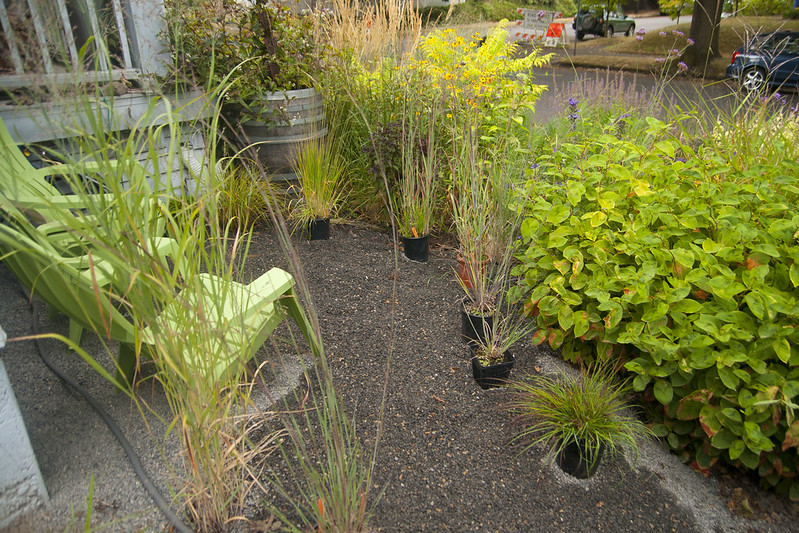 trialing grasses