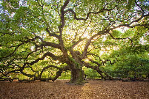 sunset sun tree history nature canon southcarolina historic charleston sunstar 1635mm 1635mmf28l angleoak mshaw 5dmark2 canoneos5dmarkll