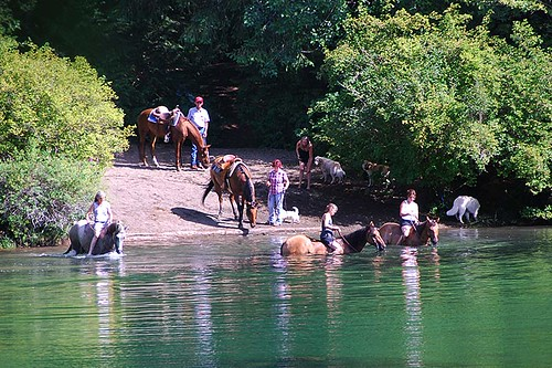 Horses cool off in the Puntledge River near Courtenay, Vancouver Island, British Columbia