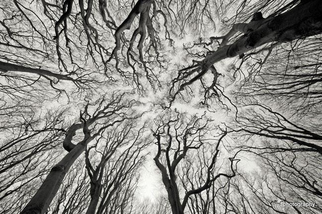 nature-patterns-002