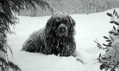 My Snow Beast
