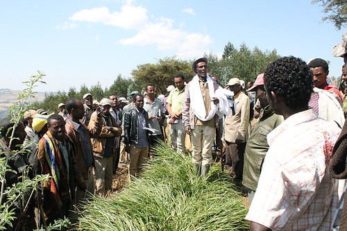 Farmer explaning his experience with Desho grass to field day visitors at Kolugelan, Jeldu (Photo credit - ILRI / Adie)