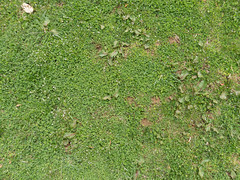 Grass_green-plants-clover-whiteflowers-dirtpatches_wide.jpg