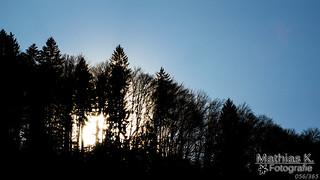 Leuchtender Wald | Projekt 365 | Tag 56
