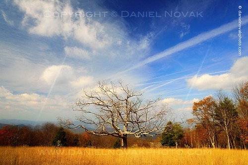 park autumn tree fall nature colors clouds season landscape outdoors photography virginia photo nationalpark unitedstates image picture meadow bluesky photograph stanley va shenandoah lonelytree