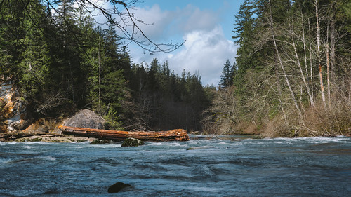 trees nature water canon river log scenic pacificnorthwest washingtonstate pnw canonef2470mmf28lusm canoneos5dmarkiii johnwestrock