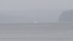 Orca Whales off of Blake Island