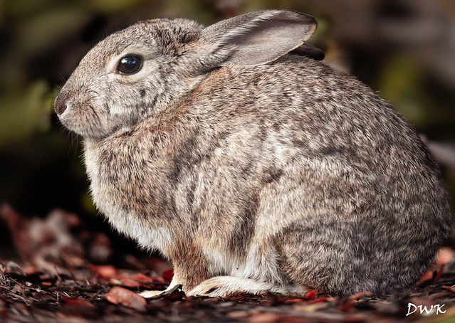 Must Love Bunnies