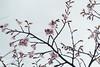 Photo:IMG_6923-8 By zunsanzunsan