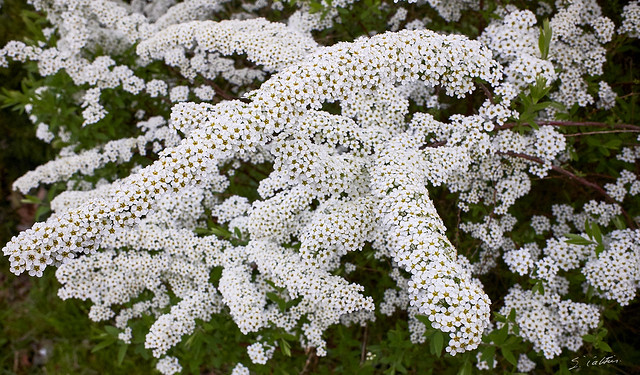 Chenilles florales - Caterpillars flowers