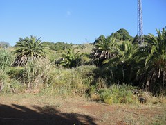 Santa Lucia, La Palma , NGID491555845