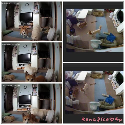 Furbo 狗狗攝影機