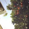 Laranja :tangerine: na rua #laranja #orange #grecia #greece #orange