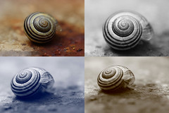 A whiter shade of snail