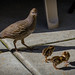 May-13-Quail Family-091
