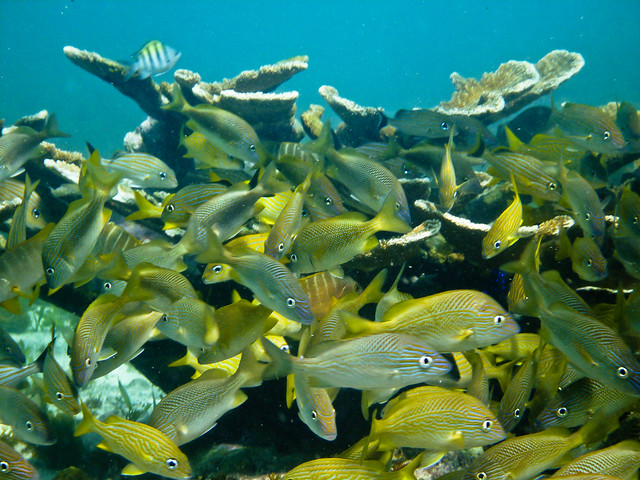 Feeding Frenzy at Coral