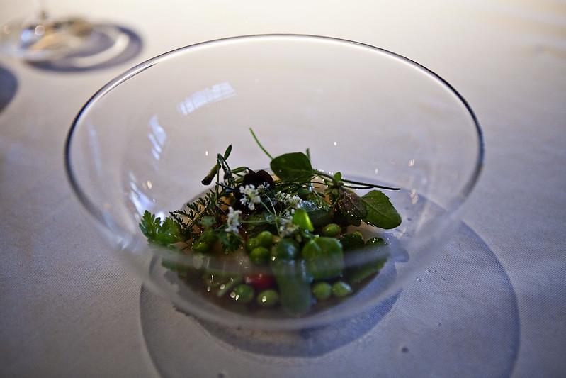 geranium-herb-garden-2