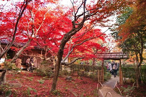 【写真】2012 紅葉 : 厭離庵/2020-10-15/IMGP7838
