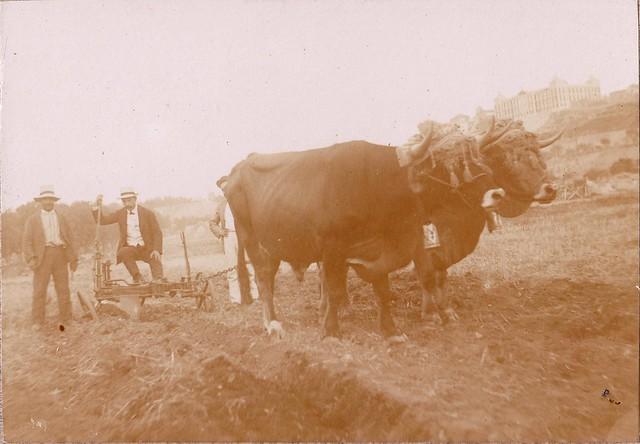 Demostración de la Feria de Maquinaria Agrícola en la Vega Baja hacia 1910. Fotografía de los Sucesores de Compañy © Cámara Agraria de Toledo, Junta de Comunidades de Castilla-La Mancha