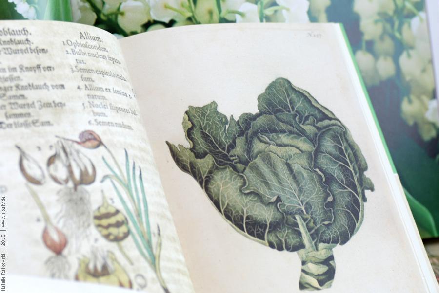 Knoblauch und Weißkohl sind sehr inspirierend :-)