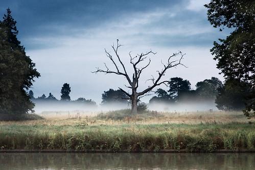 mist sunrise deadtree kevday langleycountrypark berksire
