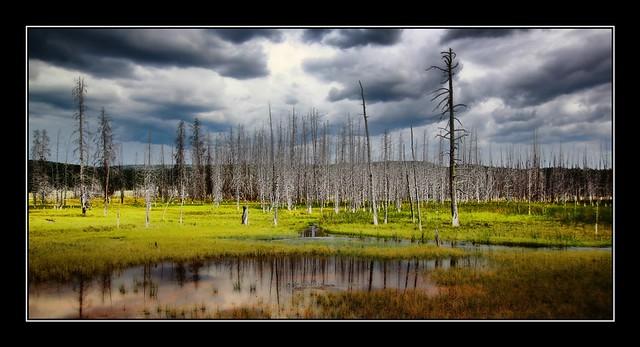 Yellowstone National Park, Wyoming USA.