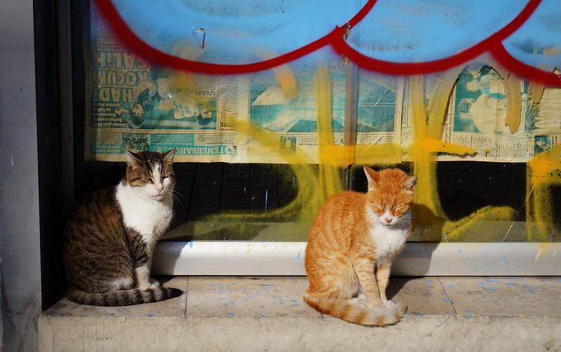 Stray-Cats-Istanbul-(10)