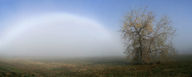 the fog-bow