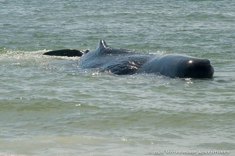 Whale9,10