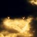 RHB1363-Rare Hybrid Solar Eclipse from Gordons Pond Cape Henlopen State Park - Dracula's Fangs!