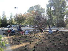 Volunteers from the November 2, 2013 community planting day at the UC Davis California Native Plant Garden.