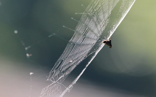 Oh what a tangled web we weave, by ricmcarthur