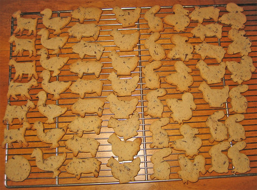 Biscotti con farina di castagne by fugzu